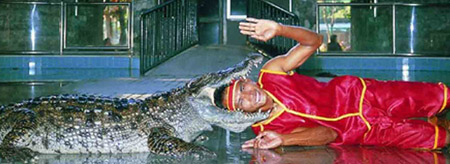 The Million-Year Stone Park and Crocodile Farm